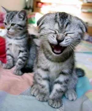 Laughing Kitten