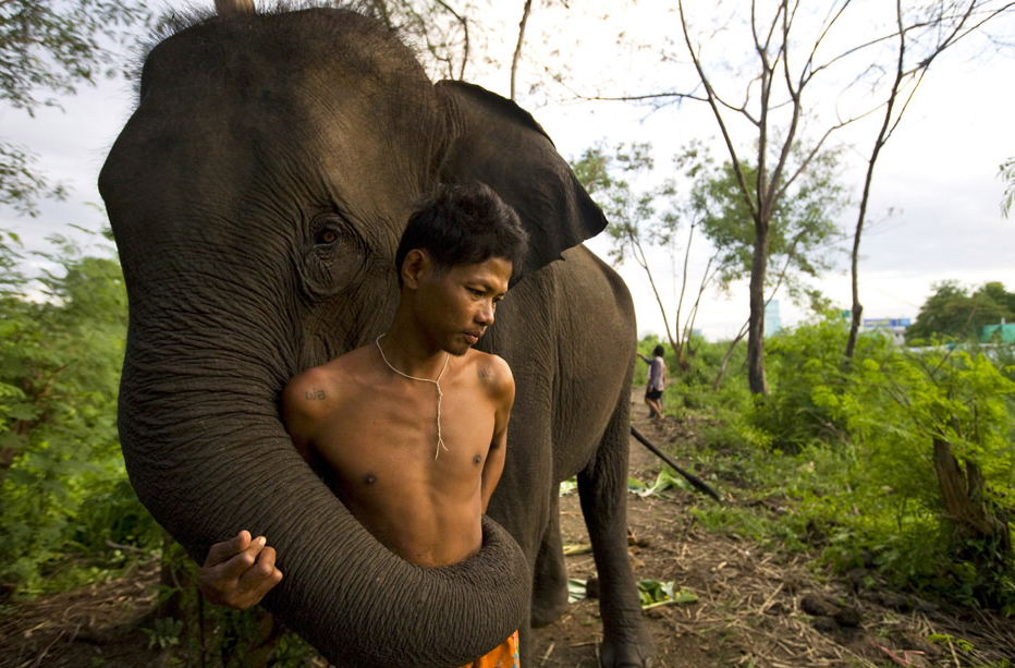A Man and His Elephant, by Paula Bronstein